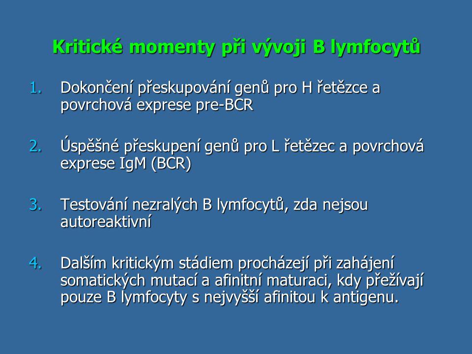 Kritické momenty při vývoji B lymfocytů