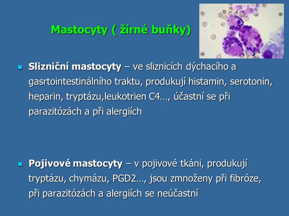 Mastocyty ( žírné buňky)