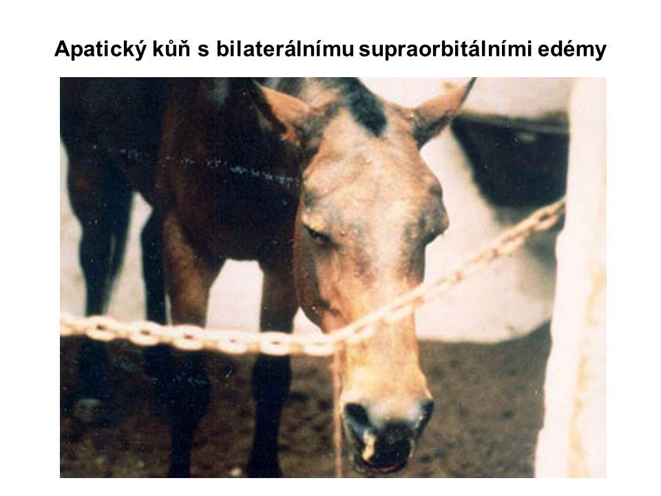 Apatický kůň s bilaterálnímu supraorbitálními edémy