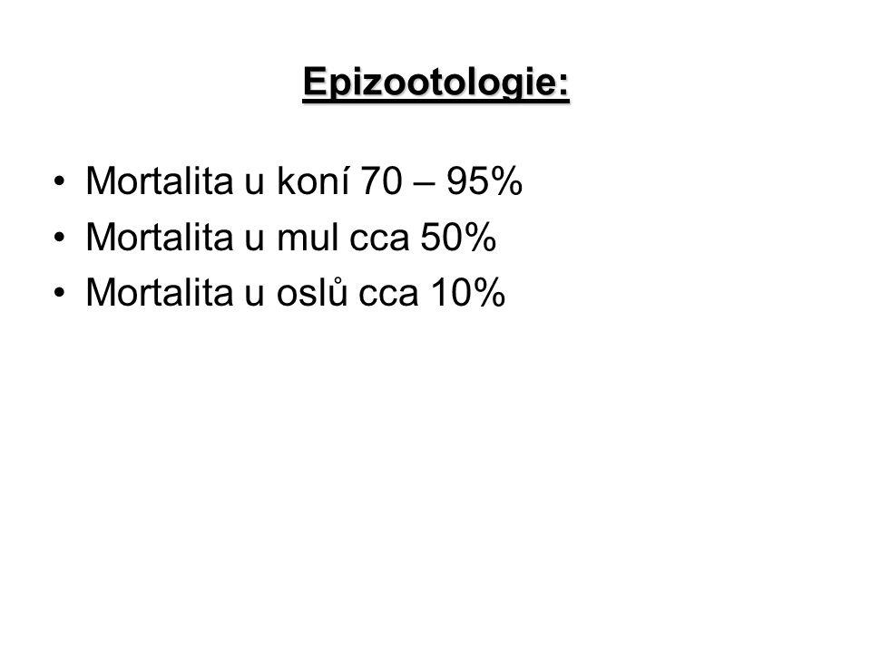 Epizootologie: Mortalita u koní 70 – 95% Mortalita u mul cca 50% Mortalita u oslů cca 10%