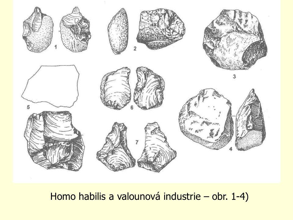 Homo habilis a valounová industrie – obr. 1-4)