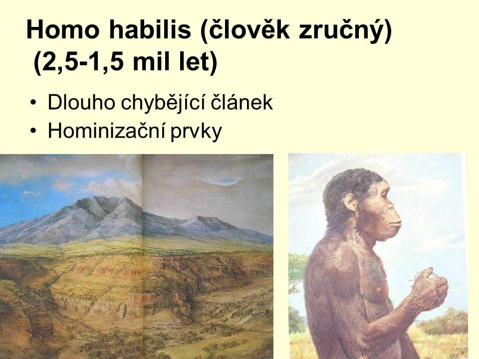 Homo habilis (člověk zručný) (2,5-1,5 mil let)
