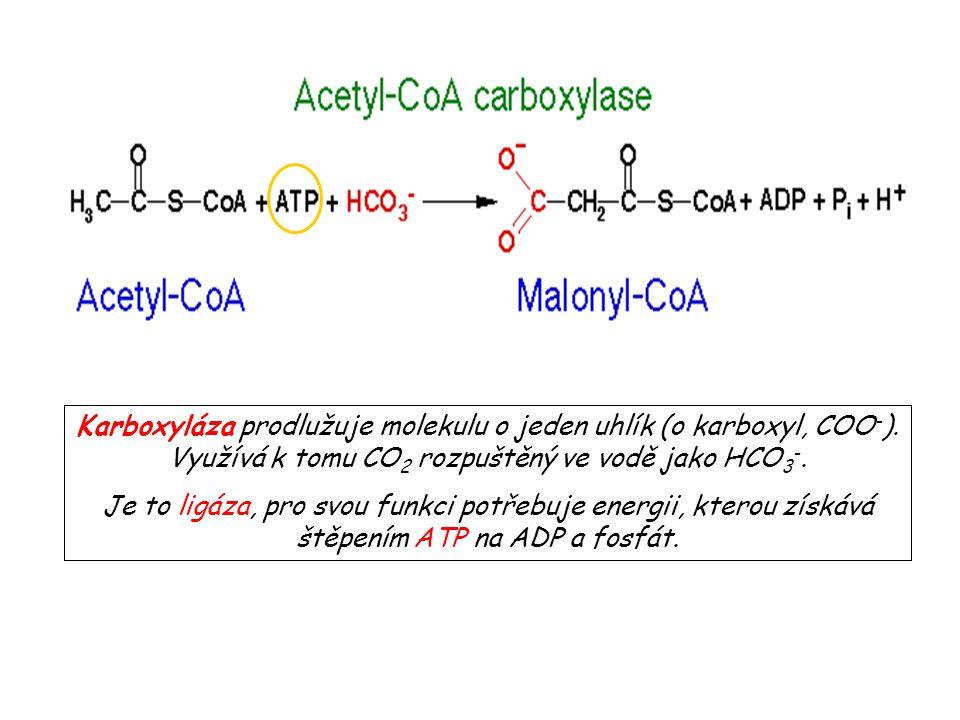 Karboxyláza prodlužuje molekulu o jeden uhlík (o karboxyl, COO-)