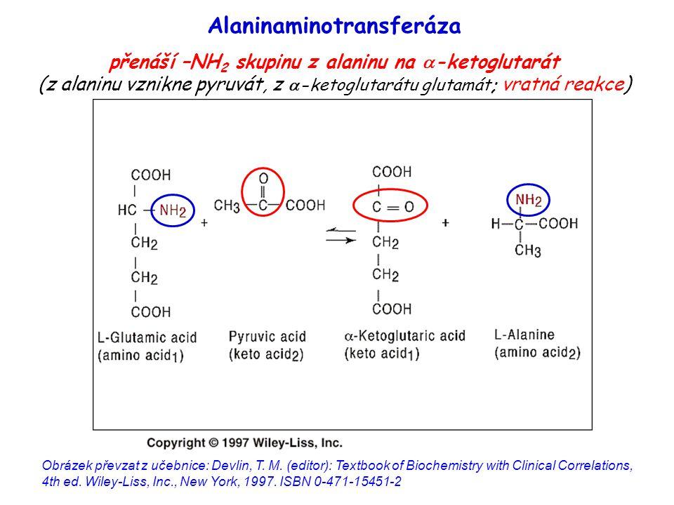 Alaninaminotransferáza
