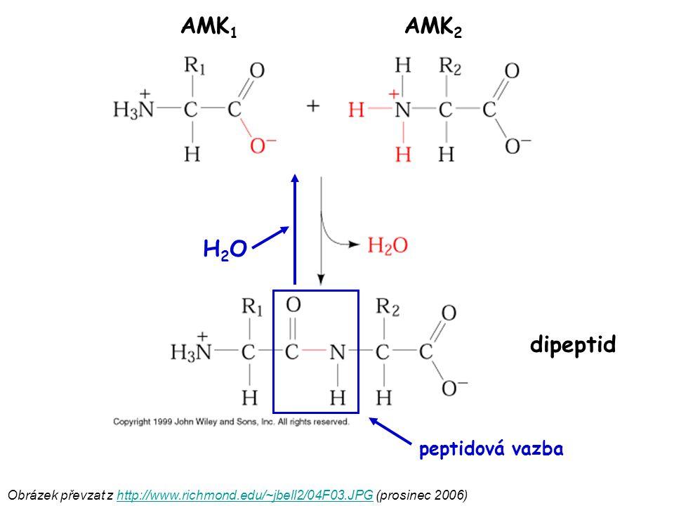 AMK1 AMK2 H2O dipeptid peptidová vazba