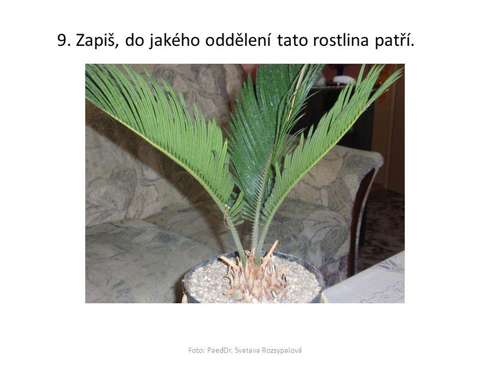 Foto: PaedDr. Svatava Rozsypalová