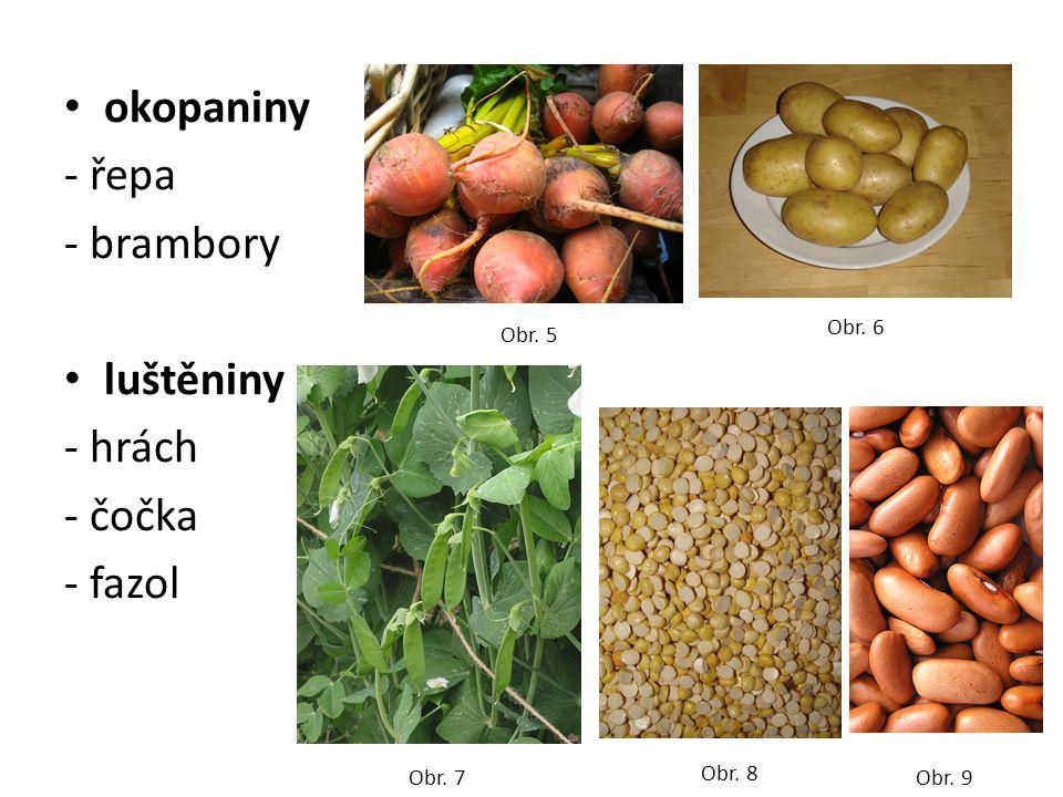 okopaniny - řepa - brambory luštěniny - hrách - čočka - fazol Obr. 5