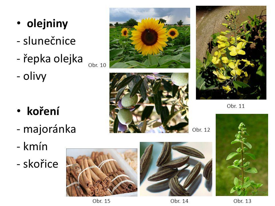 olejniny - slunečnice - řepka olejka - olivy koření - majoránka - kmín