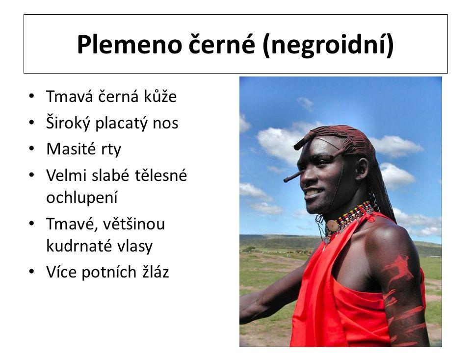 Plemeno černé (negroidní)