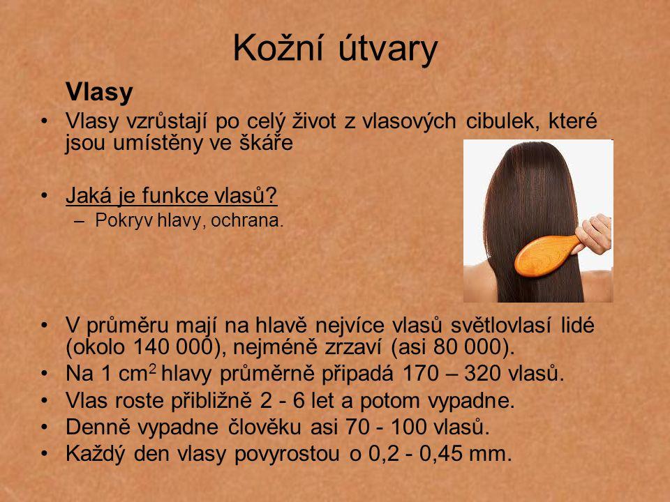 Kožní útvary Vlasy. Vlasy vzrůstají po celý život z vlasových cibulek, které jsou umístěny ve škáře.