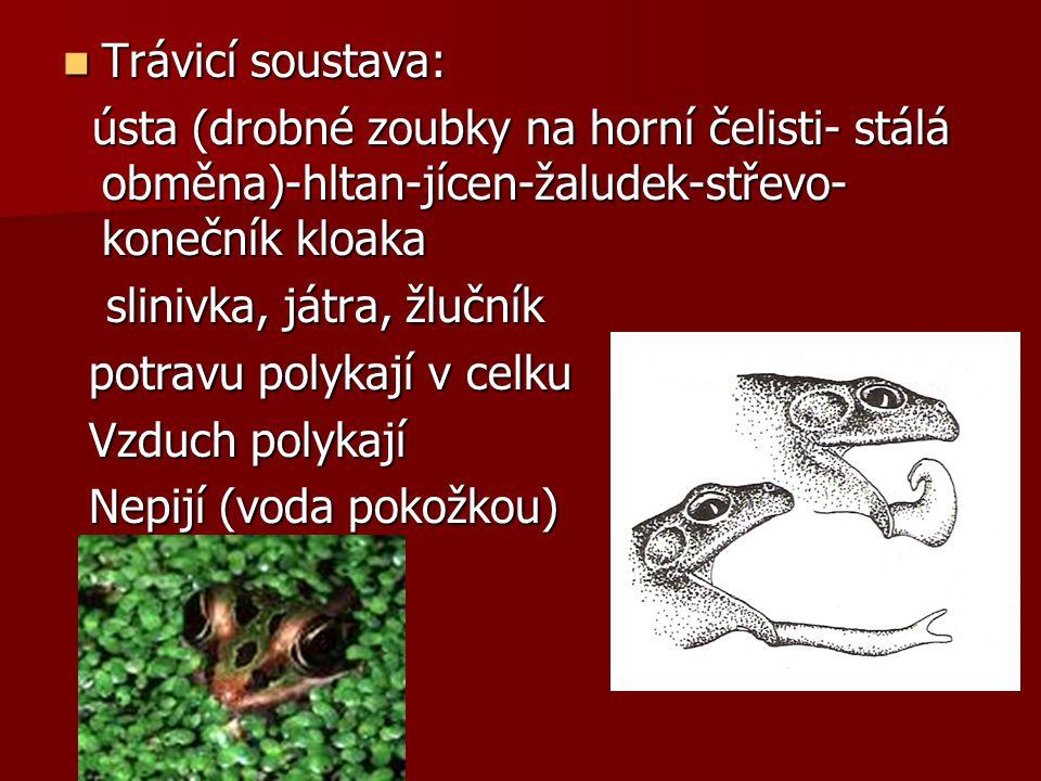 Trávicí soustava: ústa (drobné zoubky na horní čelisti- stálá obměna)-hltan-jícen-žaludek-střevo-konečník kloaka.
