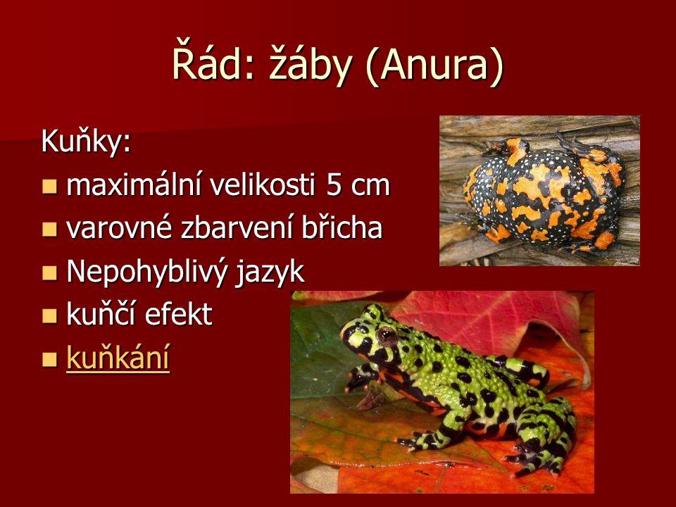Řád: žáby (Anura) Kuňky: maximální velikosti 5 cm