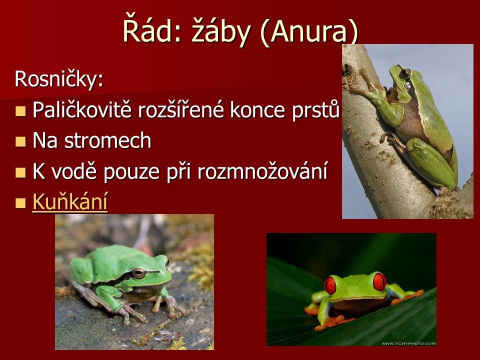 Řád: žáby (Anura) Rosničky: Paličkovitě rozšířené konce prstů