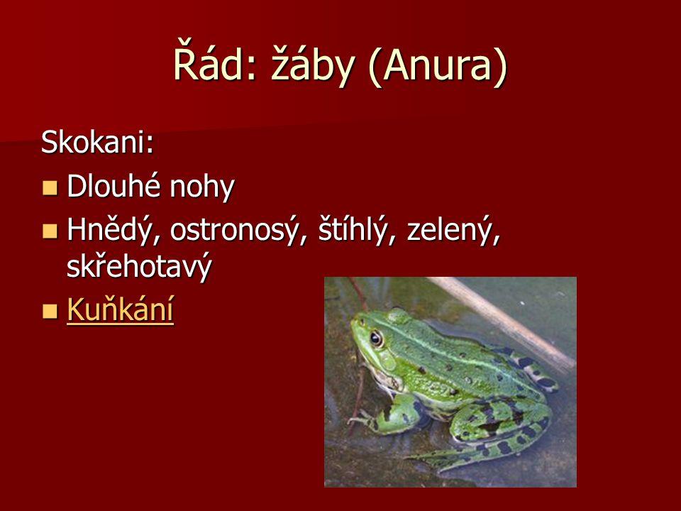 Řád: žáby (Anura) Skokani: Dlouhé nohy
