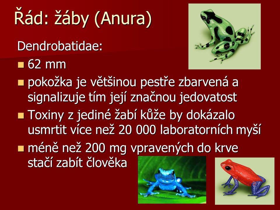 Řád: žáby (Anura) Dendrobatidae: 62 mm