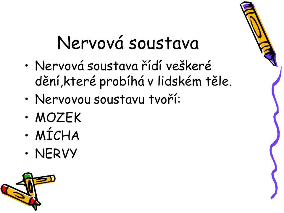 Nervová soustava Nervová soustava řídí veškeré dění,které probíhá v lidském těle. Nervovou soustavu tvoří: