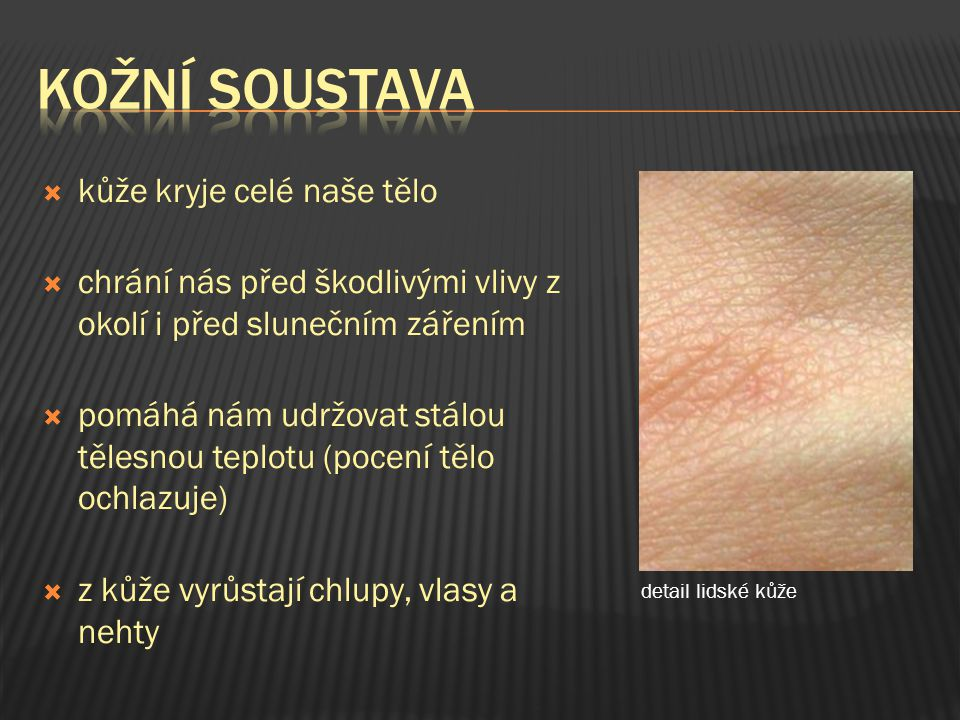 kožní soustava kůže kryje celé naše tělo