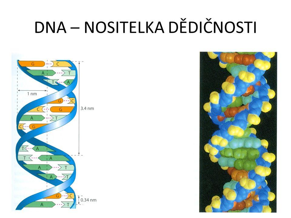 DNA – NOSITELKA DĚDIČNOSTI