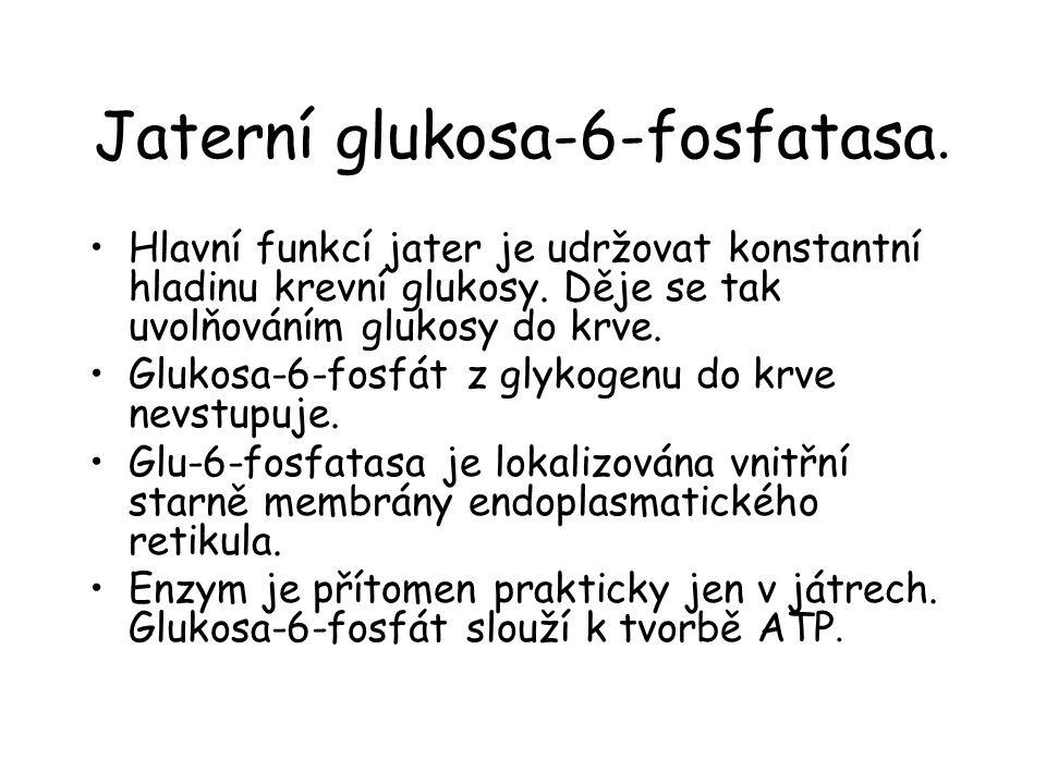 Jaterní glukosa-6-fosfatasa.