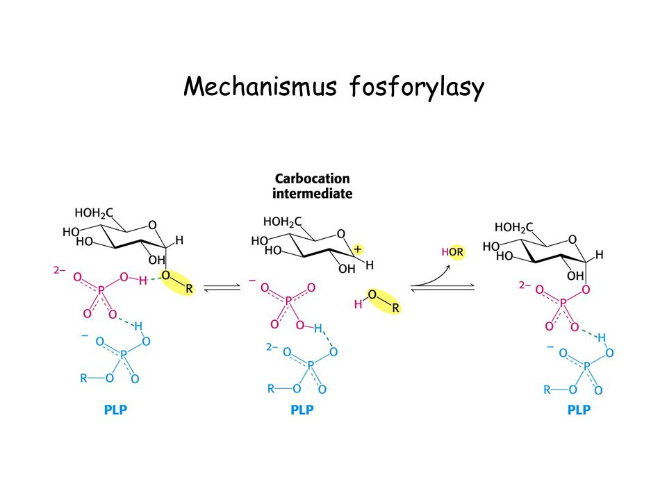Mechanismus fosforylasy