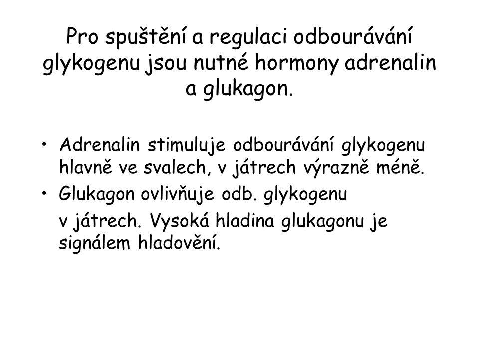 Pro spuštění a regulaci odbourávání glykogenu jsou nutné hormony adrenalin a glukagon.
