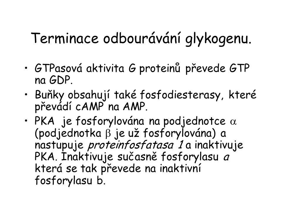 Terminace odbourávání glykogenu.