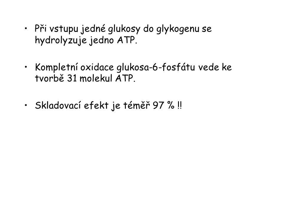 Při vstupu jedné glukosy do glykogenu se hydrolyzuje jedno ATP.
