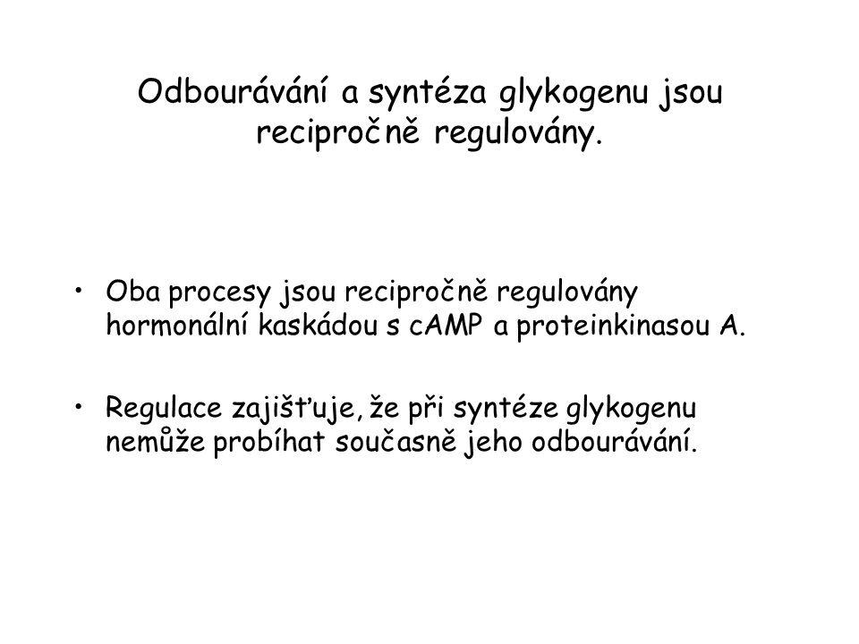 Odbourávání a syntéza glykogenu jsou recipročně regulovány.