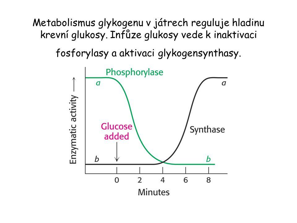 Metabolismus glykogenu v játrech reguluje hladinu krevní glukosy