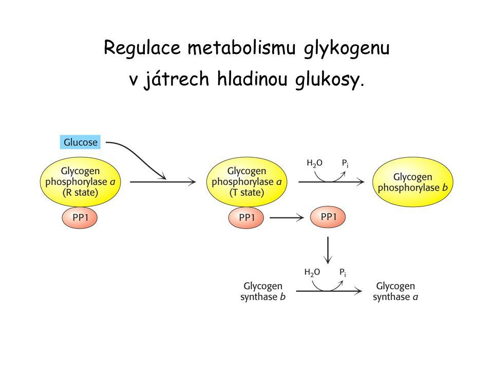 Regulace metabolismu glykogenu v játrech hladinou glukosy.