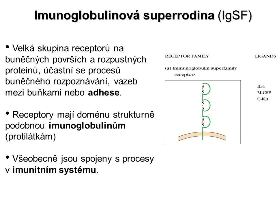 Imunoglobulinová superrodina (IgSF)