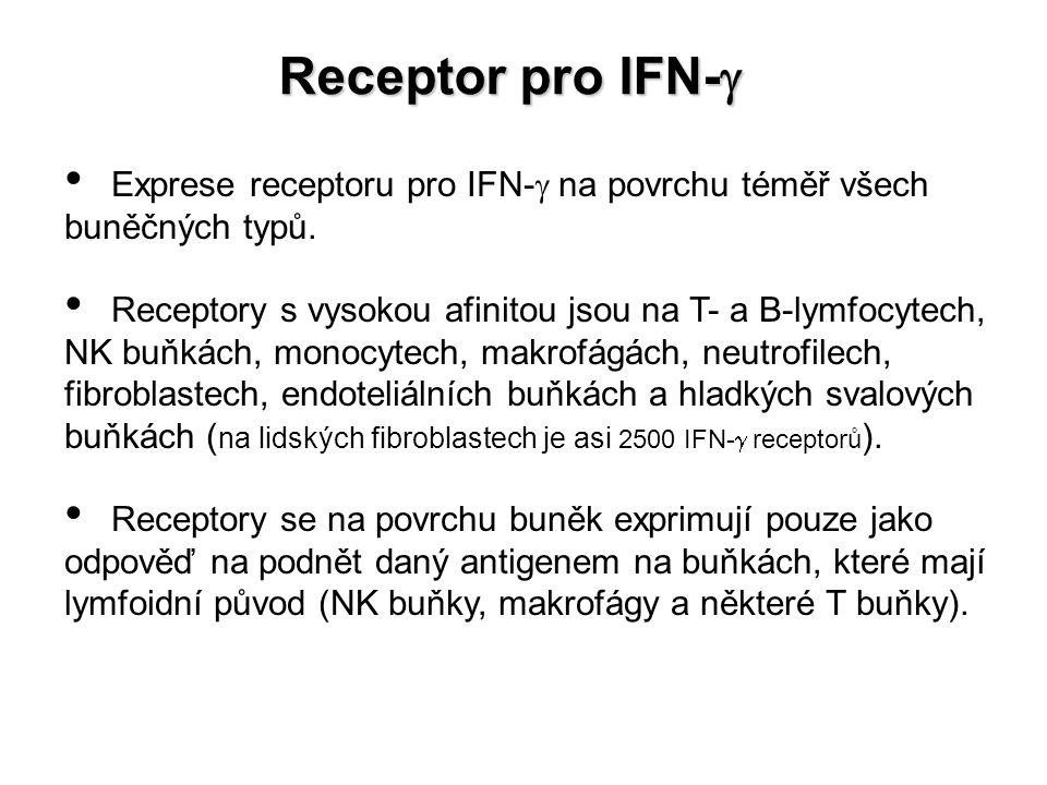 Receptor pro IFN-g Exprese receptoru pro IFN-g na povrchu téměř všech buněčných typů.