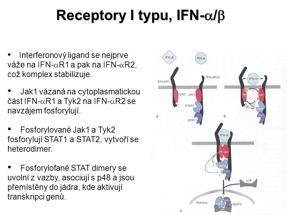 Receptory I typu, IFN-a/b