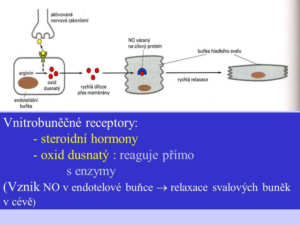 Vnitrobuněčné receptory:. - steroidní hormony