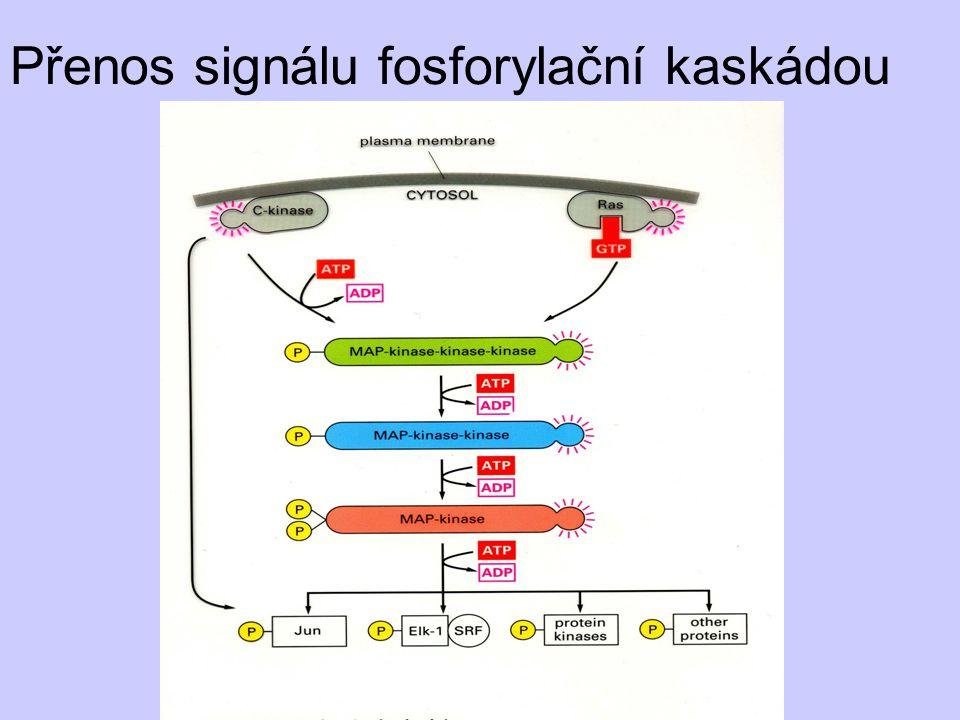 Přenos signálu fosforylační kaskádou