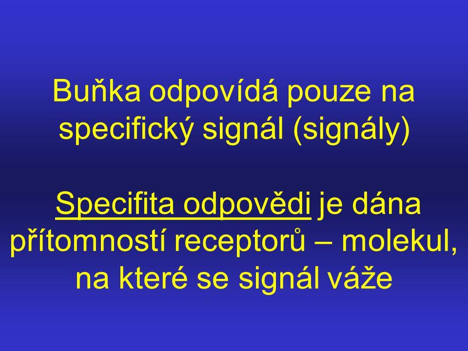 Buňka odpovídá pouze na specifický signál (signály) Specifita odpovědi je dána přítomností receptorů – molekul, na které se signál váže