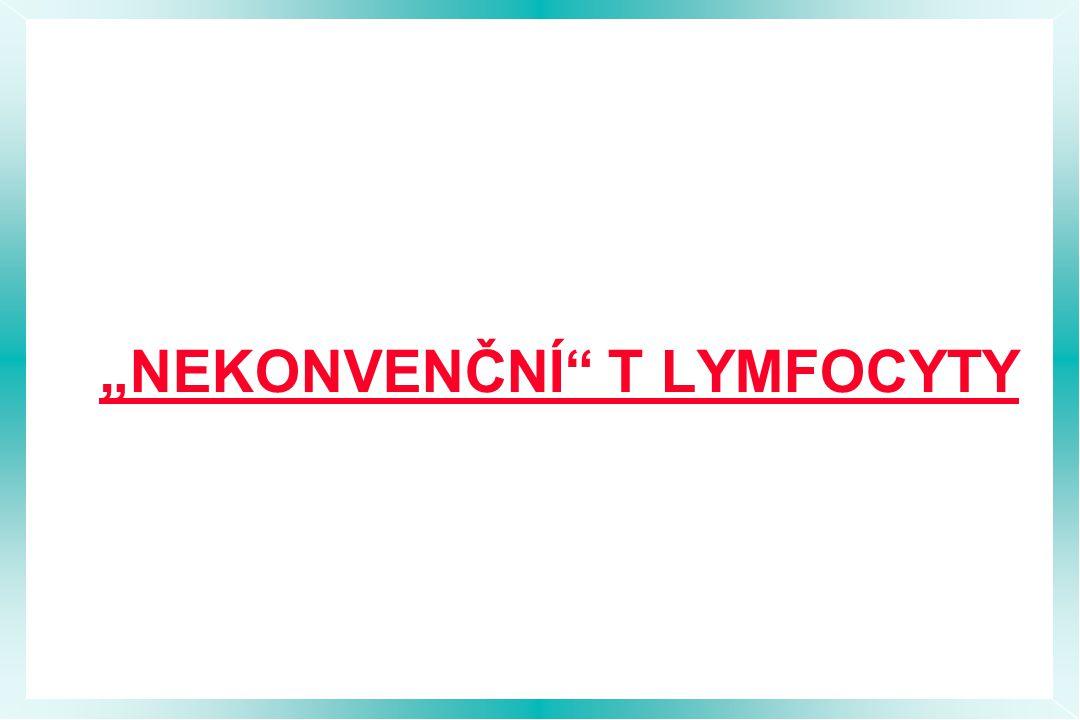 """""""NEKONVENČNÍ T LYMFOCYTY"""