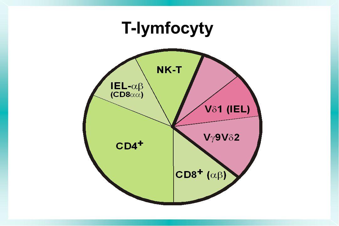 T-lymfocyty EXISTUJE ŘADA JINÝCH SUBPOPULACÍ T LYMFOCYTŮ, NĚKTERÉ Z NICH MAJÍ RELATIVNĚ HOMOGENNÍ TCR A TUDÍŽ MAJÍ SPÍŠE NEADAPTIVNÍ CHARAKTER.