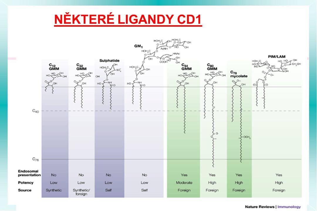 NĚKTERÉ LIGANDY CD1