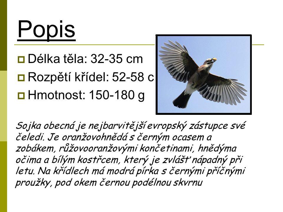Popis Délka těla: 32-35 cm Rozpětí křídel: 52-58 cm