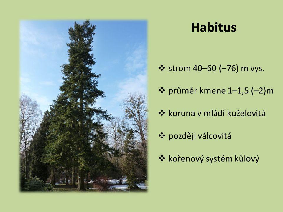 Habitus strom 40–60 (–76) m vys. průměr kmene 1–1,5 (–2)m