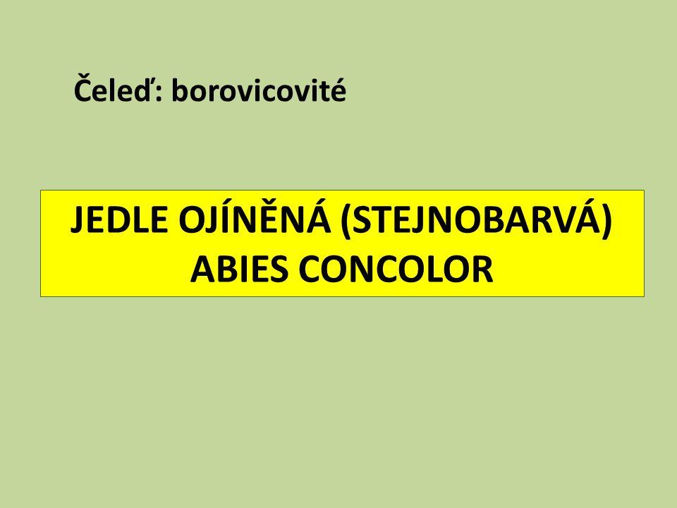 JEDLE OJÍNĚNÁ (STEJNOBARVÁ) ABIES CONCOLOR