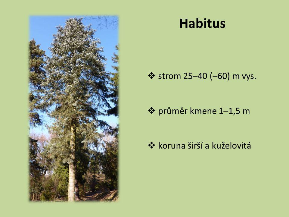 Habitus strom 25–40 (–60) m vys. průměr kmene 1–1,5 m