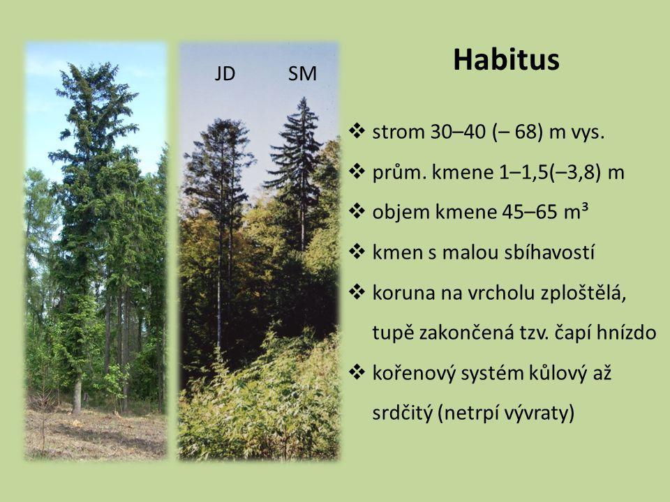 Habitus JD SM strom 30–40 (– 68) m vys. prům. kmene 1–1,5(–3,8) m