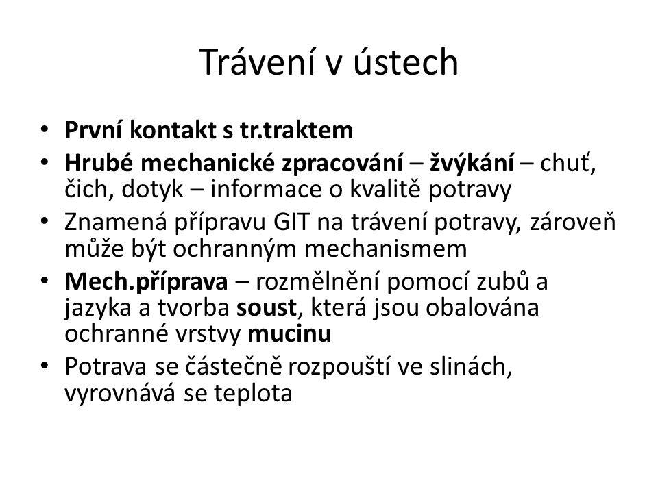 Trávení v ústech První kontakt s tr.traktem