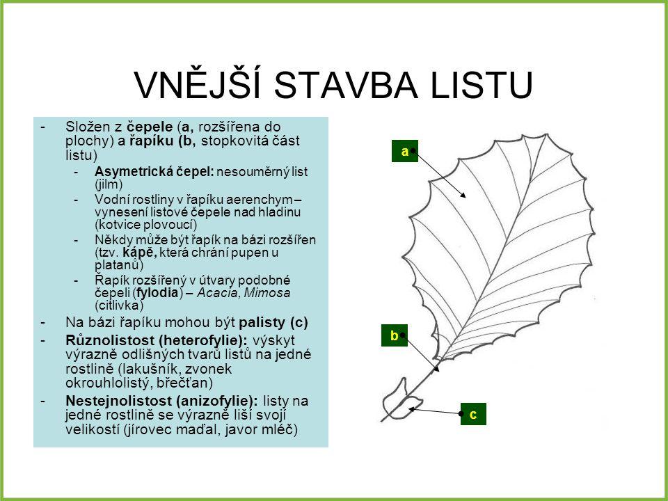 VNĚJŠÍ STAVBA LISTU Složen z čepele (a, rozšířena do plochy) a řapíku (b, stopkovitá část listu) Asymetrická čepel: nesouměrný list (jilm)