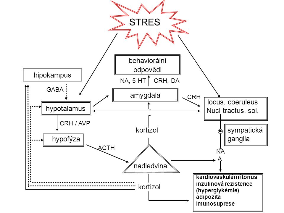 STRES behaviorální odpovědi hypotalamus locus. coeruleus