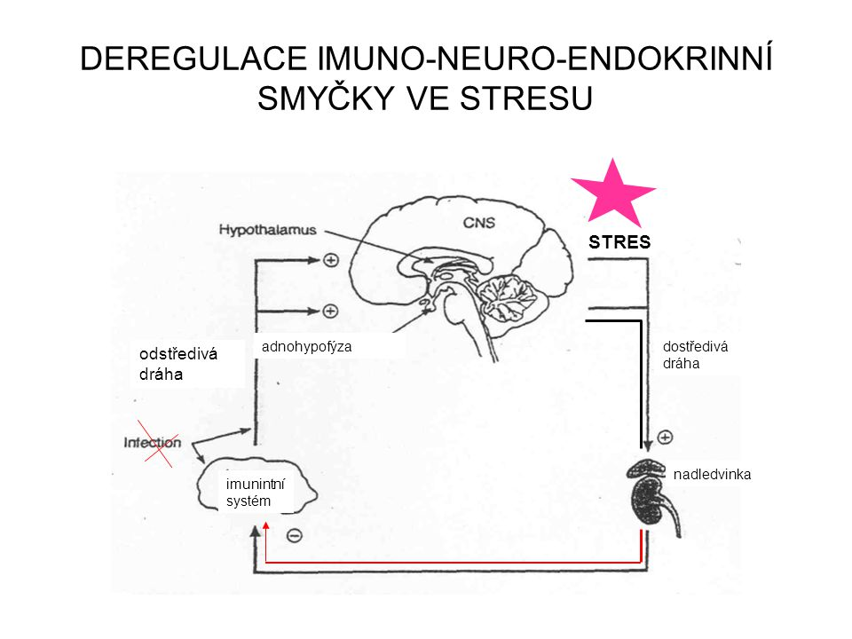 DEREGULACE IMUNO-NEURO-ENDOKRINNÍ SMYČKY VE STRESU