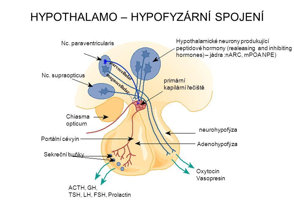 HYPOTHALAMO – HYPOFYZÁRNÍ SPOJENÍ