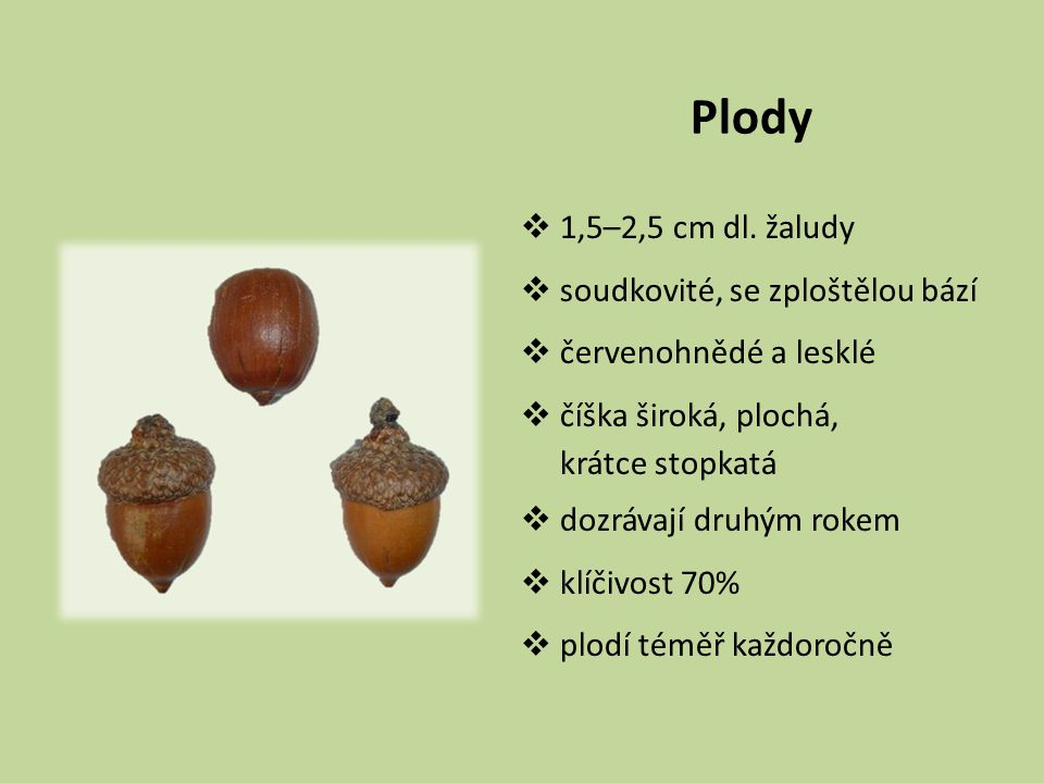Plody 1,5–2,5 cm dl. žaludy soudkovité, se zploštělou bází
